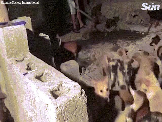 Cảnh đánh đập man rợ trong lò mổ chó ở Trung Quốc