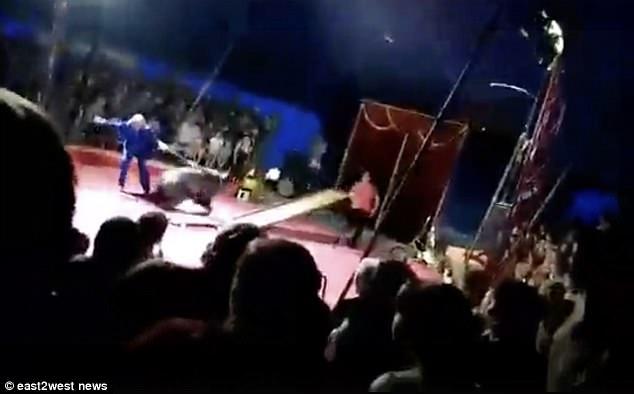 Nga: Gấu khổng lồ tấn công người huấn luyện trước mặt khán giả - 1