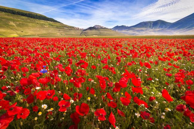 Piano Grande, Italia: Piano Grande là một trong những vùng cao nguyên đẹp nhất ở châu Âu, nằm trên độ cao hơn 1.200m, bao quanh bởi các ngọn núi và thung lũng.Vào cuối tháng 5 và đầu tháng 6, cả cao nguyên như bừng sáng nhờ hàng triệu những đóa hoa đủ màu sắc.