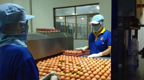 Giá trứng gà, vịt tăng kỷ lục - 1