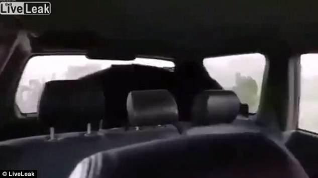 """Video: Gấu bị bắn chết bỗng """"sống lại"""" khiến thợ săn hãi hùng - 1"""