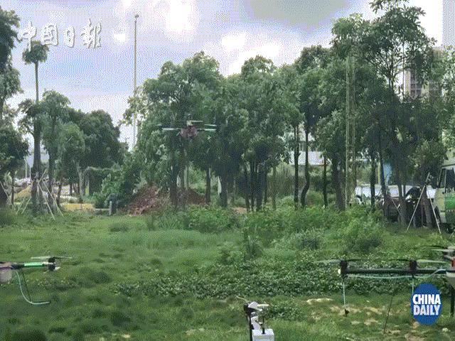 Nông dân Trung Quốc sử dụng máy bay hiện đại không người lái phun thuốc trừ sâu