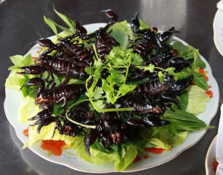 """Dân nhậu Hà Thành: Đặc sản """"độc"""" bọ xít khả năng """"soán ngôi"""" bọ cạp - 1"""
