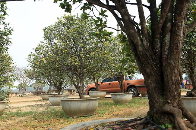 """Vườn mai tứ quý của anh Phan Văn Toàn (TP Việt Trì, Phú Thọ) được coi là """"độc nhất vô nhị"""" ở Việt Nam. Đây là những cây mai tứ quýquý hiếm được anh sưu tầmtrong nhiều năm."""