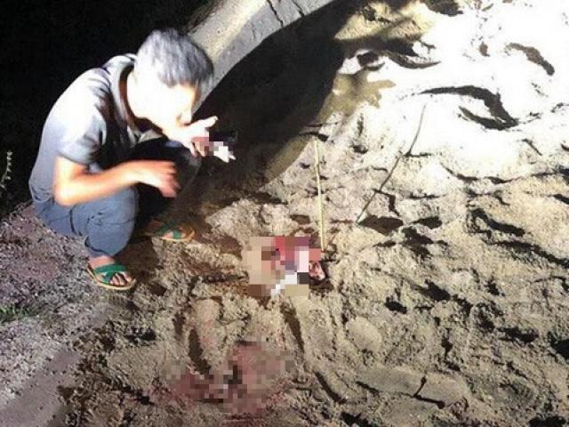 Vụ bé trai 7 tuổi bị đàn chó cắn tử vong: Công an vào cuộc điều tra