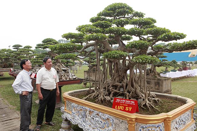 """Tại triển lãm sinh vật cảnh Sơn Tây mở rộng năm 2019, cây sanh có tên """"lực sĩ"""" thu hút giới chơi cây bằng """"vẻ đẹp khỏe khoắn"""". Đây cũng là dịp để du khách chiêm ngưỡng một trong những cây sanh cổ, đẹp nhất Hà Nội xưa."""
