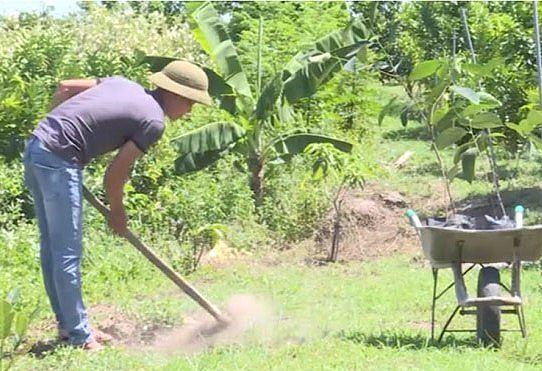 Người dân Bình Phước đổ xô trồng mít Thái vì lãi 'khủng' - 1