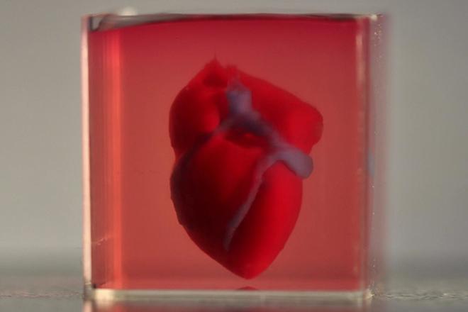 Sốc: Trái tim đầu tiên được in 3D bằng tế bào của chính bệnh nhân - 1
