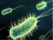 """Tin tức sức khỏe - Phác đồ """"chuẩn"""" cho người viêm loét dạ dày có nhiễm khuẩn HP"""