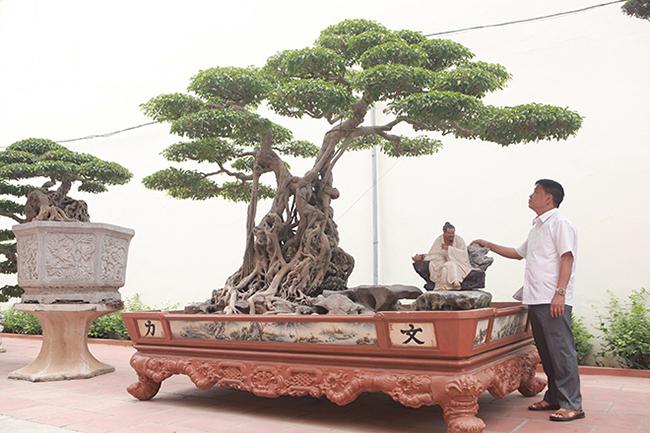 """Anh Phan Văn Toàn (TP. Việt Trì, PhúThọ) làngười sở hữu nhiều cây cảnh quý hiếm ở Việt Nam. Tác phẩm """"Ông bụt"""" là một trong những cây có giá trị mà anh Toàn mất rất nhiều công sức để sở hữu."""