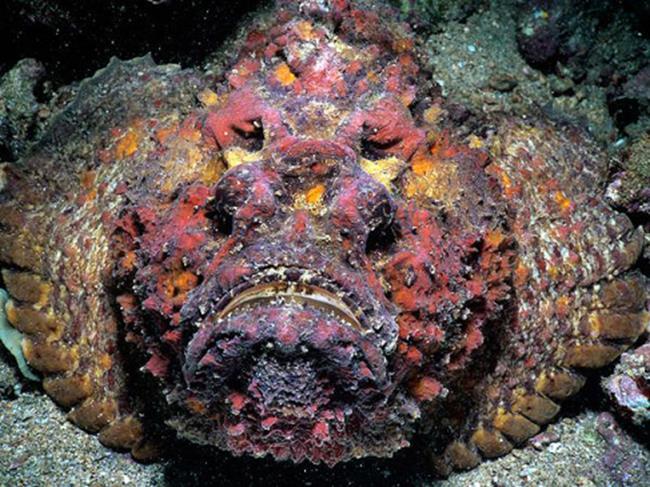 Loài cá mặt quỷ xấu phát hờn này có giá gần chục triệu đồng/con. Giá cao như vậy nhưng không phải cứ muốn ăn là có. Khách hàng ở Việt Nam thường xuyên phải đặt trước thì mới có cơ hội thưởng thức loài cá này.