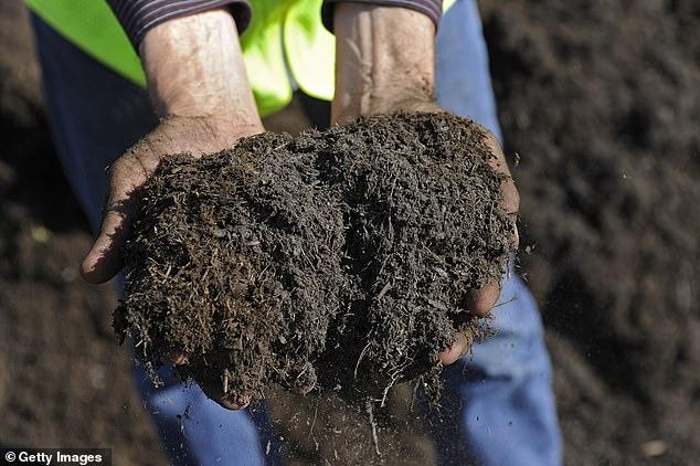 America: Dead bodies will become fertilizer. - One
