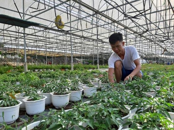 Đà Nẵng: Thuê đất trồng hoa mà làm ra 300 triệu đồng mỗi năm - 1