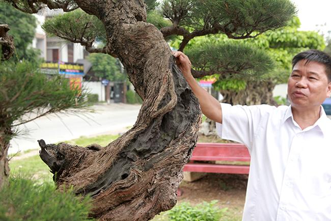 Anh Toàn cho biết, cây phi lao gần 200 năm tuổi này trước kia của một dòng họ trong Bình Định. Họ đã bán lại cho anh với giá500 triệu đồng cách đây hơn 10 năm.