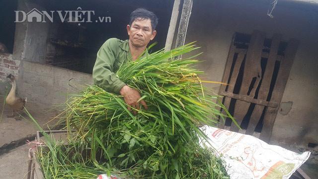 Làm giàu ở nông thôn: Cắt cỏ dại nuôi con nhiều sao mà xây nhà lầu - 1