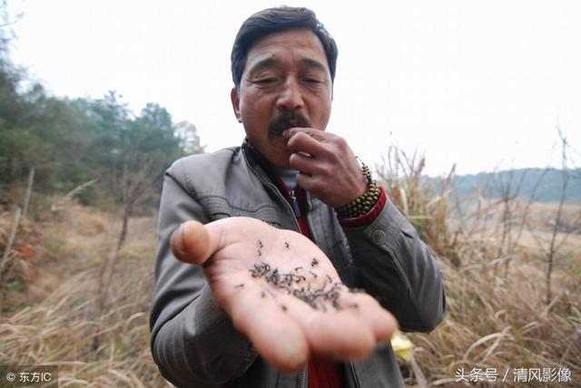 Lùng sục khắp nơi bắt loài tí hon màu đen sì, bán gần 6 triệu đồng/kg - 1