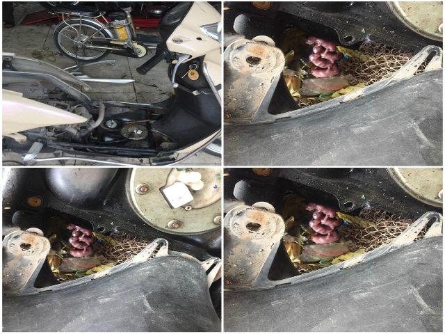 SỐC: Chuột đẻ con nhung nhúc trong xe ga Honda LEAD
