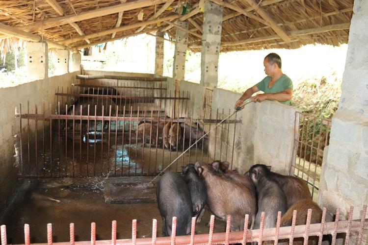 Nơi khỉ ho cò gáy, ăn nên làm ra nhờ loài lợn lông như chổi xể - 1
