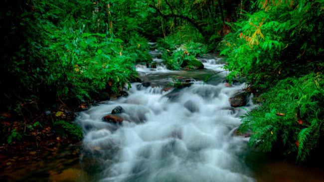 Vườn quốc gia Bwindi, Uganda: Khu rừng nguyên sinh này là một trong những nơi ở cuối cùng của loài khỉ đột núi, với khoảng 400 cá thể.