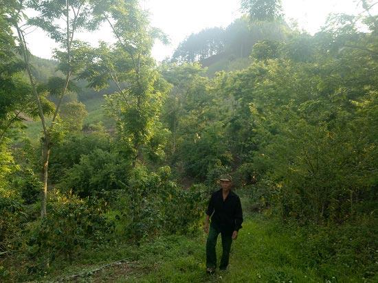 Kỳ công trồng cả trăm cây quý, giá bán đắt như vàng, lái cứ gạ mua - 1