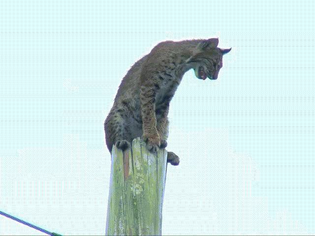 Lực lượng cứu hộ toát mồ hôi giải cứu chú mèo ngồi vắt vẻo trên đỉnh cột điện