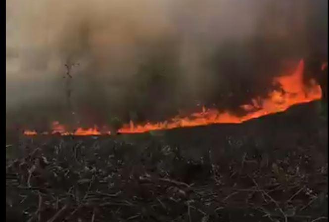 Nắng nóng đổ lửa, cháy rừng liên tiếp ở TT-Huế - 1
