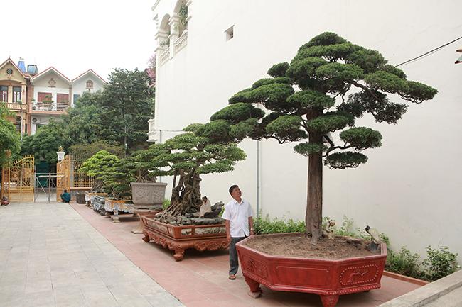 Chủ sở hữu vườn cây cảnh là anh Phan Văn Toàn (TP. Việt Trì, Phú Thọ). Năm 2014, hội Sinh vật cảnh Châu Á bình chọn đâylà Vườn cây xuất sắc nhất Đông Nam Á. Năm 2015 vườn cây tiếp tục được các tổ chức trong nước công nhận là vườn cây cảnh di sản đầu tiên tại Việt Nam.