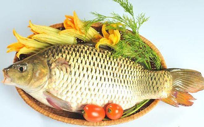 Mắc bệnh này ăn cá chép có thể chết người - 1