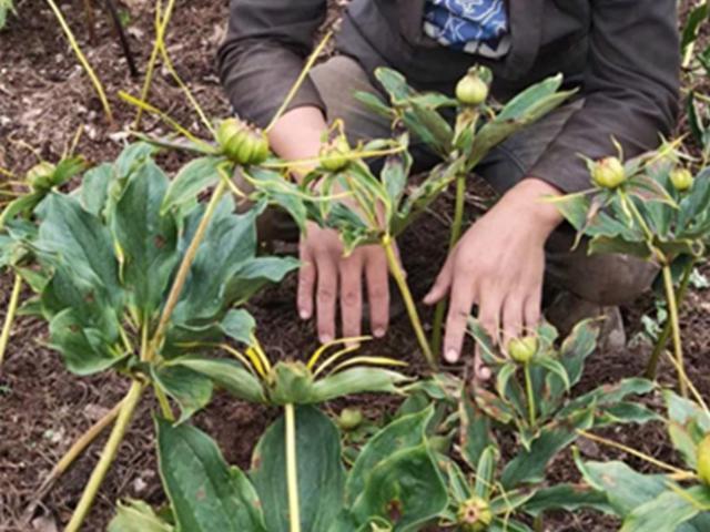 Thanh niên trồng cây tên lạ hoắc, kiếm trăm triệu mỗi năm