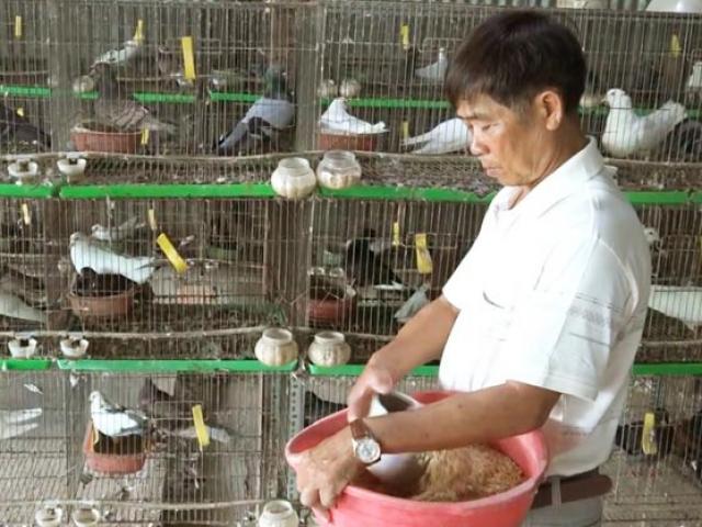 An Giang: Kiếm nửa tỷ mỗi năm nhờ mê nuôi bồ câu kiểng