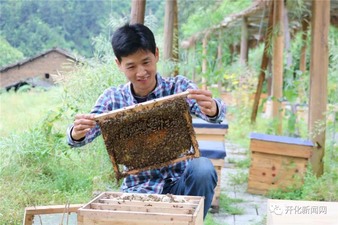 """Không tìm được việc, chàng trai về quê nuôi ong kiếm vài trăm triệu """"ngon ơ"""" - 1"""