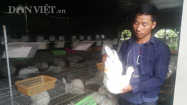 Ninh Bình: Bỏ lái xe về quê nuôi thỏ, lãi 20 triệu đồng mỗi tháng - 1