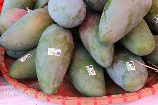 """La liệt xoài bự, nấm linh chi """"khủng"""" ở ngày hội nông sản Mường La - 1"""