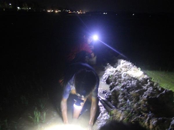 """Nắng cháy da thịt: Rọi đèn, lội bùn theo chân """"thợ săn"""" cua đồng đêm - 1"""