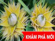 """Tin tức sức khỏe - Việt Nam: Phát hiện loài cây """"cực quý"""" cho người sa búi trĩ (lòi dom), đau rát, đi cầu ra máu"""