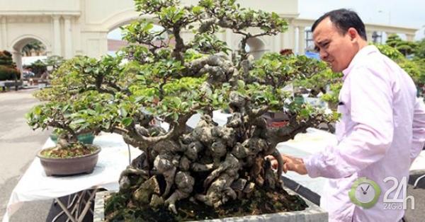 Ngắm kiệt tác si hóa thạch mini giá hơn 10 cây vàng