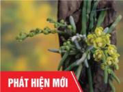 """Tin tức sức khỏe - Việt Nam: Phát hiện cây """"cực quý"""" giúp bớt tê bì chân tay, tiểu đêm, ổn định đường huyết"""