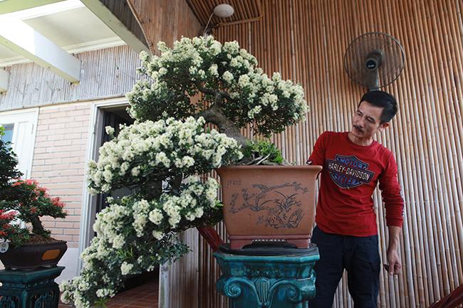 """Chủ nhân của tuyệt phẩm độc đáo này là anh Đặng Hồng Sơn (Thanh Trì, Hà Nội). Anh Sơn cho biết, cây hải châu này anh được một người ở Bình Định nhượng lại và coi như """"báu vật""""."""
