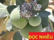 Tin tức sức khỏe - Việt Nam: phát hiện loài cây lạ mọc ven đường - khắc tinh của đờm, ho, khó thở, hen suyễn