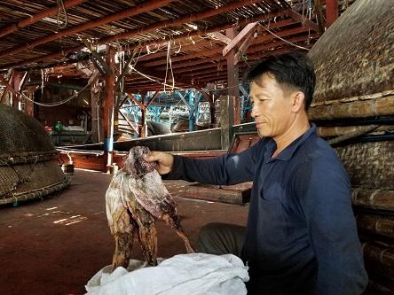 """Quảng Nam """"kêu cứu"""" Chính phủ giúp tiêu thụ hàng nghìn tấn mực khô - 1"""