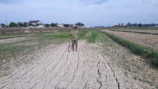 Quảng Trị: Hạn hán khốc liệt, dân biến đất lúa nứt nẻ thành ruộng dưa hấu trái ngọt lừ - 1