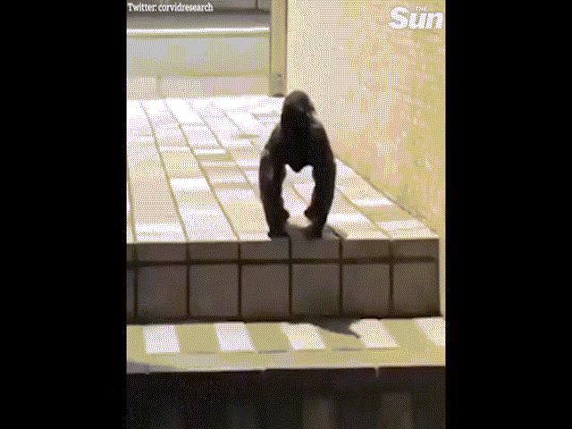 Quạ tạo dáng như khỉ đột, chết chóc như trong phim kinh dị