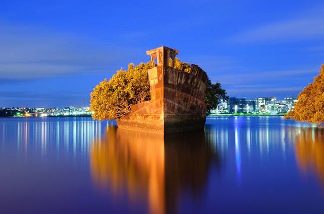 """Vịnh Homebush, Sydney: Cây rừng ngập mặn phủ kín con tàu 102 tuổi ở Sydney và được người dân địa phương gọi là """"rừng nổi""""."""