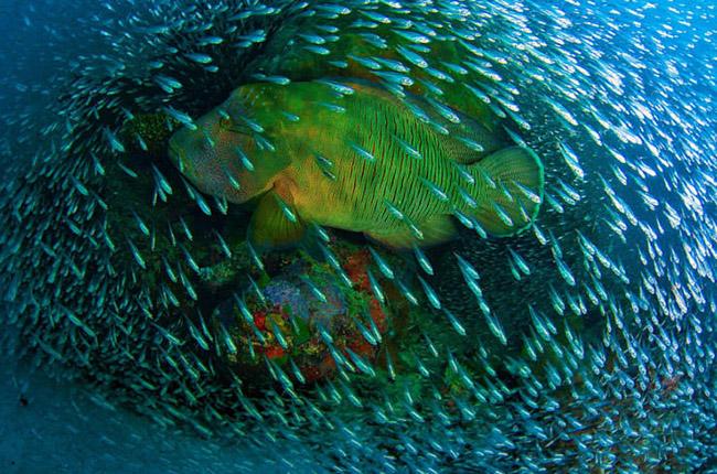 quan Thiên nhiên của Thế giới. Địa điểm tuyệt đẹp này trải dài 2.000 km trong vùng nước ấm ngoài khơi bờ biển Bắc Queensland.