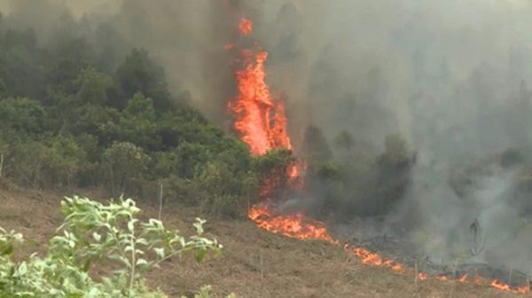 Đang cháy rừng ở Quảng Bình, hàng trăm cán bộ được huy động dập lửa - 1