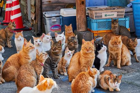 10 điểm đến mà tất cả những người yêu mèo muốn 'xách ba lô lên và đi' ngay lập tức - 1