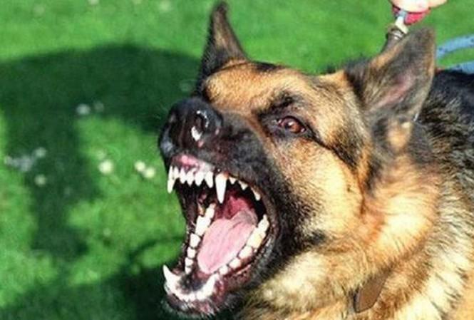 Bé trai 7 tuổi tử vong nghi do chó dại cắn từ 2 tháng trước - 1