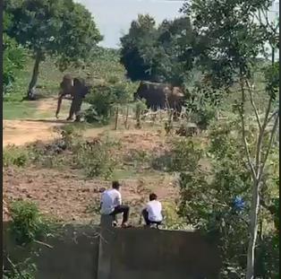 Voi nhà ở Đắk Lắk húc chết người: Nạn nhân đã chăm sóc voi 4 năm - 1