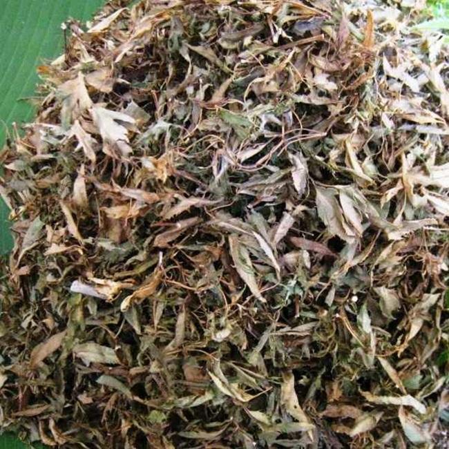 Lá khá rẻ còn rễ đinh lăng phơi khô có người rao bán tới 400.000 đồng/kg.