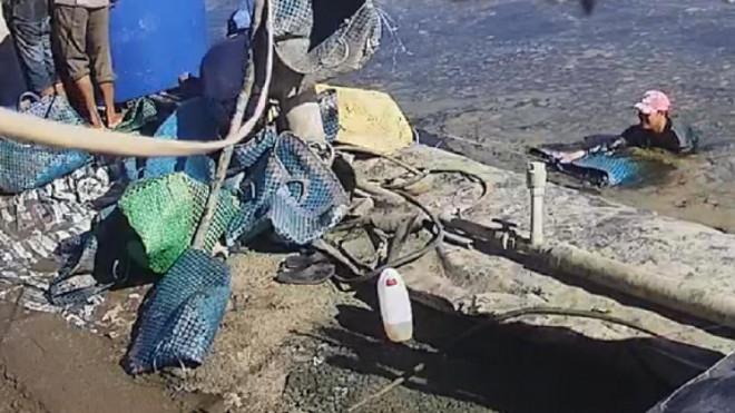 """Chủ tịch tỉnh Cà Mau chỉ đạo """"nóng"""" vụ thương lái dàn trận để trộm tôm - 1"""